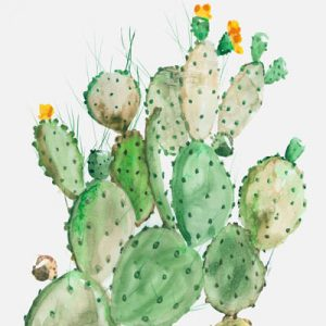 Cactus - Ferns - Tropical